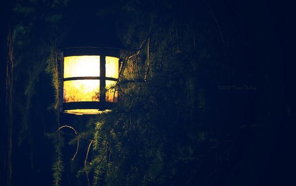 Фото обои свет, ветки, елка, фонарь