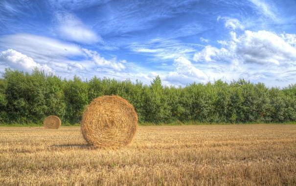 Фото обои небо, облака, деревья, поля, тень, урожай, сено
