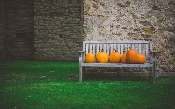 Фото обои оранжевые, тыквы, скамья, трава, двор, скамейка