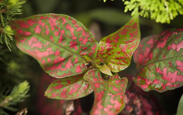Фото обои листья, природа, растение, цвет