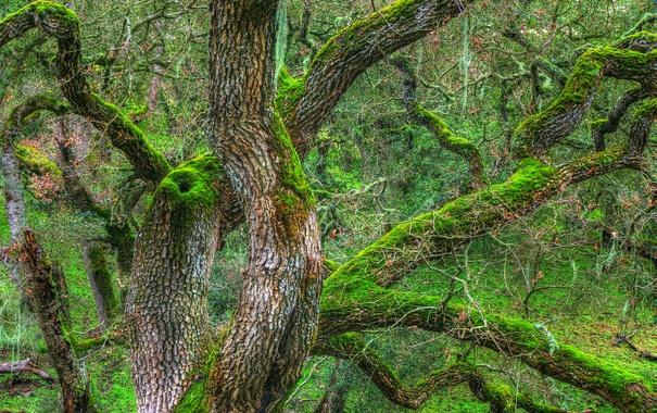 Фото обои дерево, ветки, hdr, ствол, мох