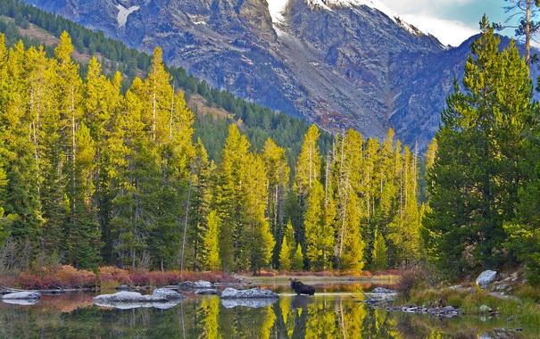 Фото обои осень, небо, деревья, горы, озеро, животное, лось