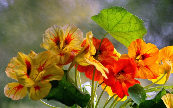 Фото обои листья, макро, лепестки, сад