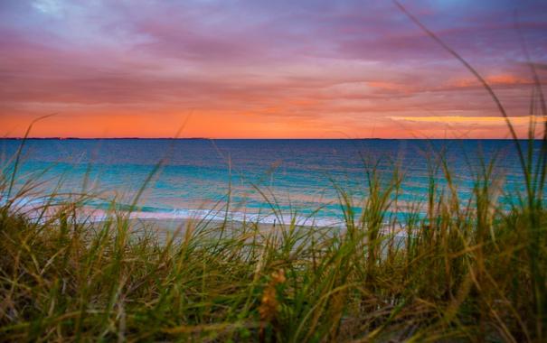 Фото обои море, небо, трава, облака, берег