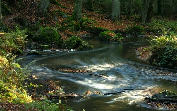 Фото обои лес, листья, деревья, ручей, камни, течение, мох