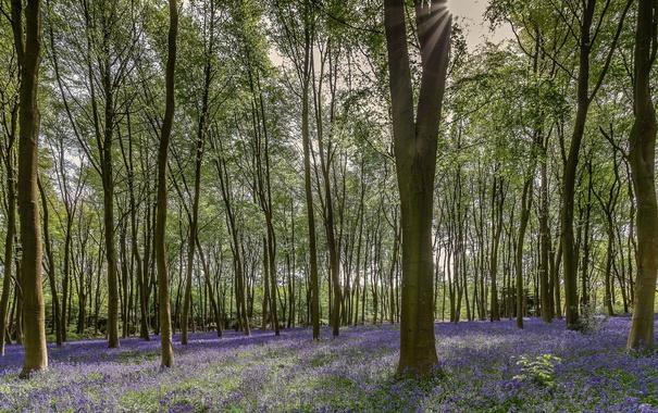 Фото обои лес, деревья, природа