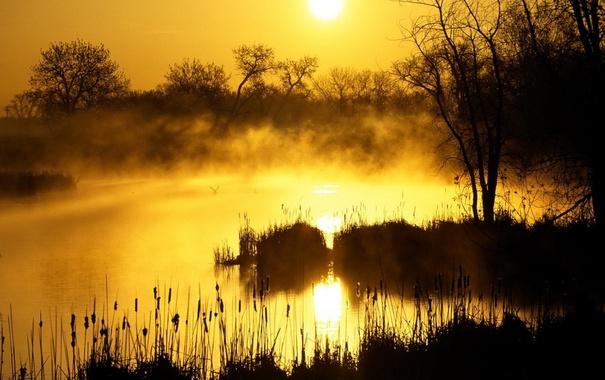 Фото обои кусты, фото, туман, природа, озеро, вечер