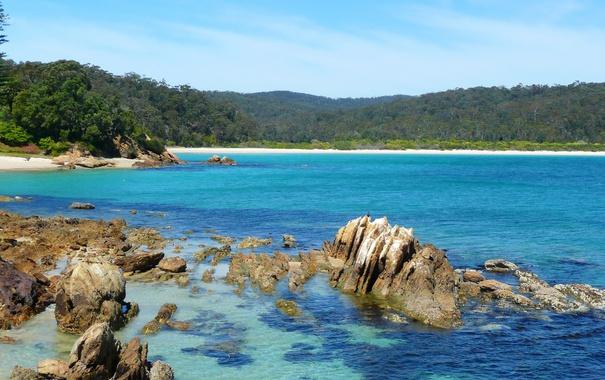 Фото обои море, деревья, камни, берег