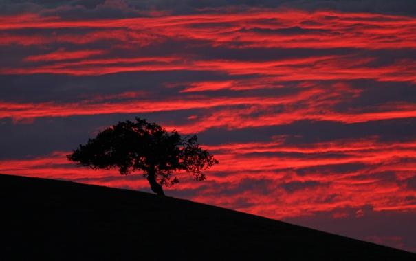 Фото обои зарево, силуэт, склон, дерево, облака, небо