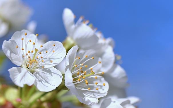 Фото обои небо, цветы, лепестки