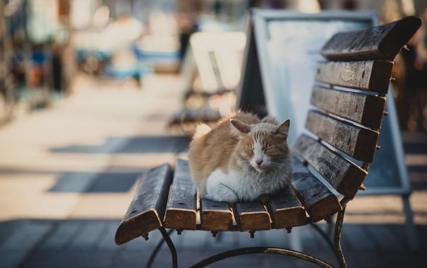 Фото обои cat, animal, bench