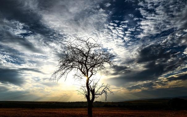 Фото обои пейзаж, ветки, дерево, облака. небо
