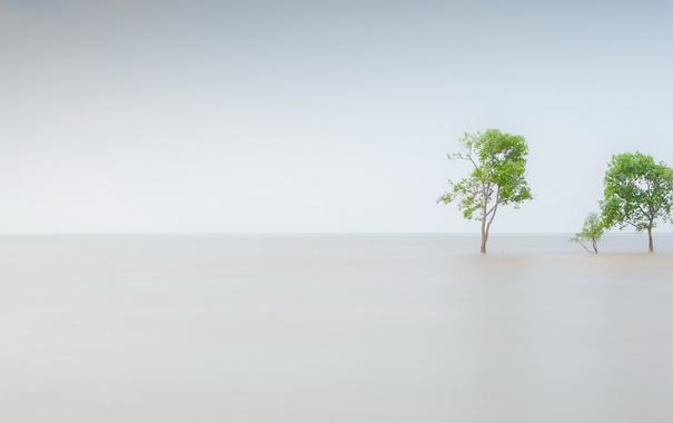 Фото обои море, дерево, фон
