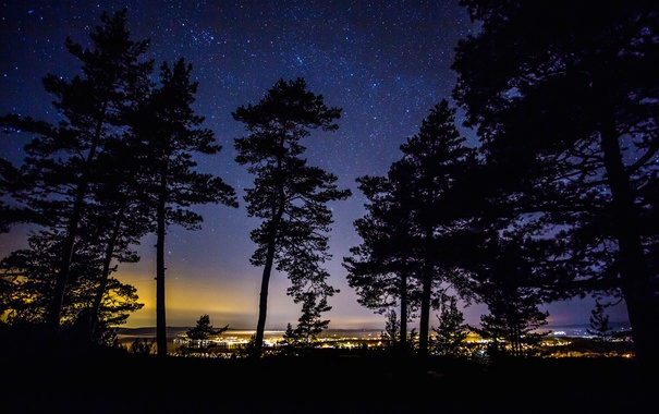Фото обои деревья, ночь, огни, силуэт, Швеция