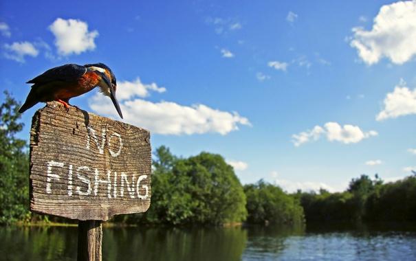Фото обои река, птица, табличка, вывеска, зимородок, kingfisher