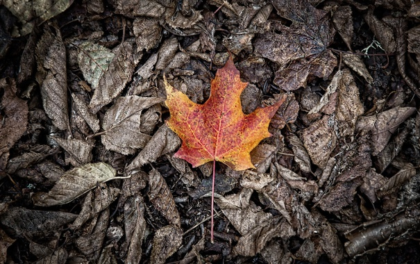 Фото обои осень, листья, природа