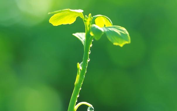 Фото обои листья, капли, роса, растение, стебель