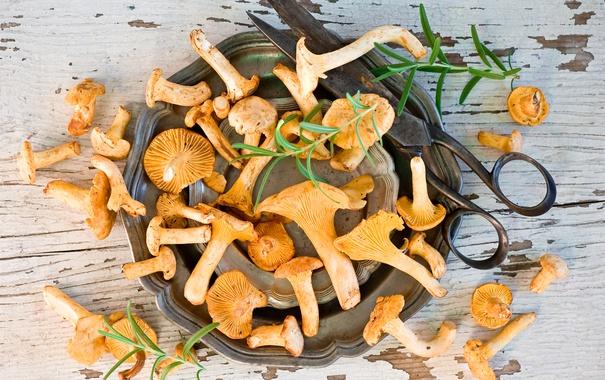 Фото обои грибы, миска, ножницы
