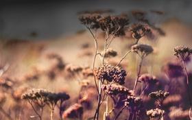 Картинка макро, растения, листы, боке