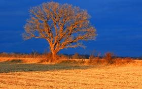Картинка поле, осень, небо, дерево