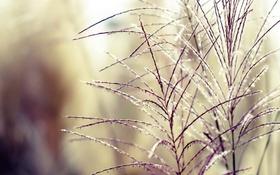 Обои трава, закат, нежность, растения