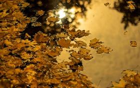 Обои природа, листья, осень, вода