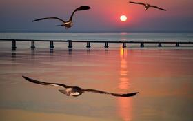 Обои море, солнце, закат, птицы, чайка, пирс, зарево