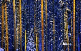 Картинка зима, лес, снег, деревья, Канада, Альберта, Национальный парк Джаспер