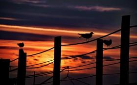 Картинка птицы, небо, ночь