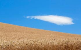 Картинка природа, облака, поле, урожай, небо