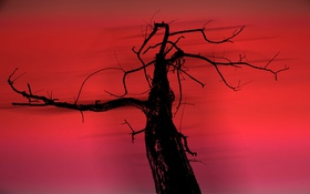 Обои ветки, дерево, ветер, силуэт