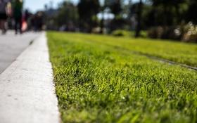 Картинка рельсы, бордюр, трава