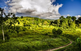 Обои зелень, небо, трава, облака, деревья, Бразилия, тропинка