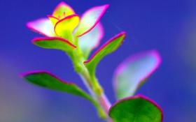 Обои листья, растение, цвет, паутина