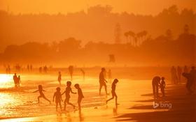 Обои вечер, дети, деревья, Калифорния, пляж, Коронадо, США