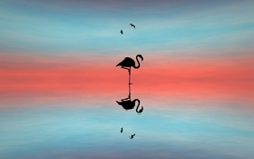 Картинка свет, птицы, фон