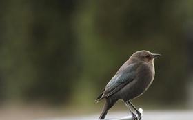 Обои макро, природа, крылья, клюв, птичка