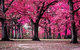 Обои деревья, природа, парк