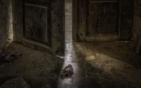 Обои фон, птица, дверь, натурализм