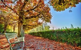 Обои скамья, улица, город, осень