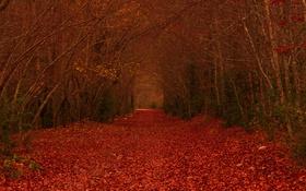 Обои листья, лес, дорожка, деревья, ветви, осень
