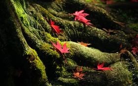 Картинка осень, листья, природа, дерево