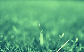 Картинка зелень, лето, трава, травинка