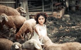 Обои фон, овцы, девочка