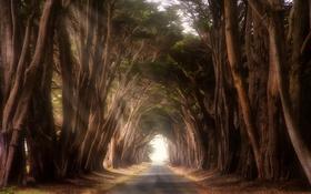 Обои США, Калифорния, деревья, дорога, Point Reyes Station, тоннель