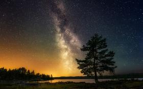 Обои небо, звезды, пейзаж, природа, дерево