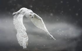 Обои снег, сова, птица, полёт