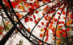 Обои беседка, листья, осень