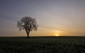 Картинка поле, природа, дерево, утро