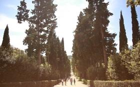 Обои дорога, зелень, лето, деревья, люди, аллея